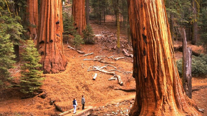 Sequoias West